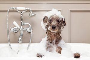 Funny Dog Taking Bubble Bath Carpet Depot